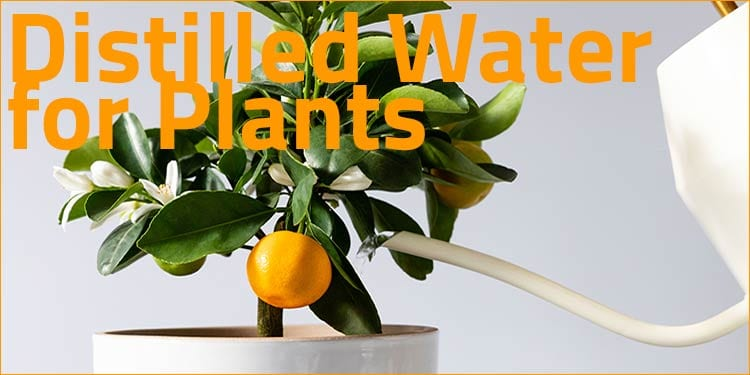 distilled water for plants