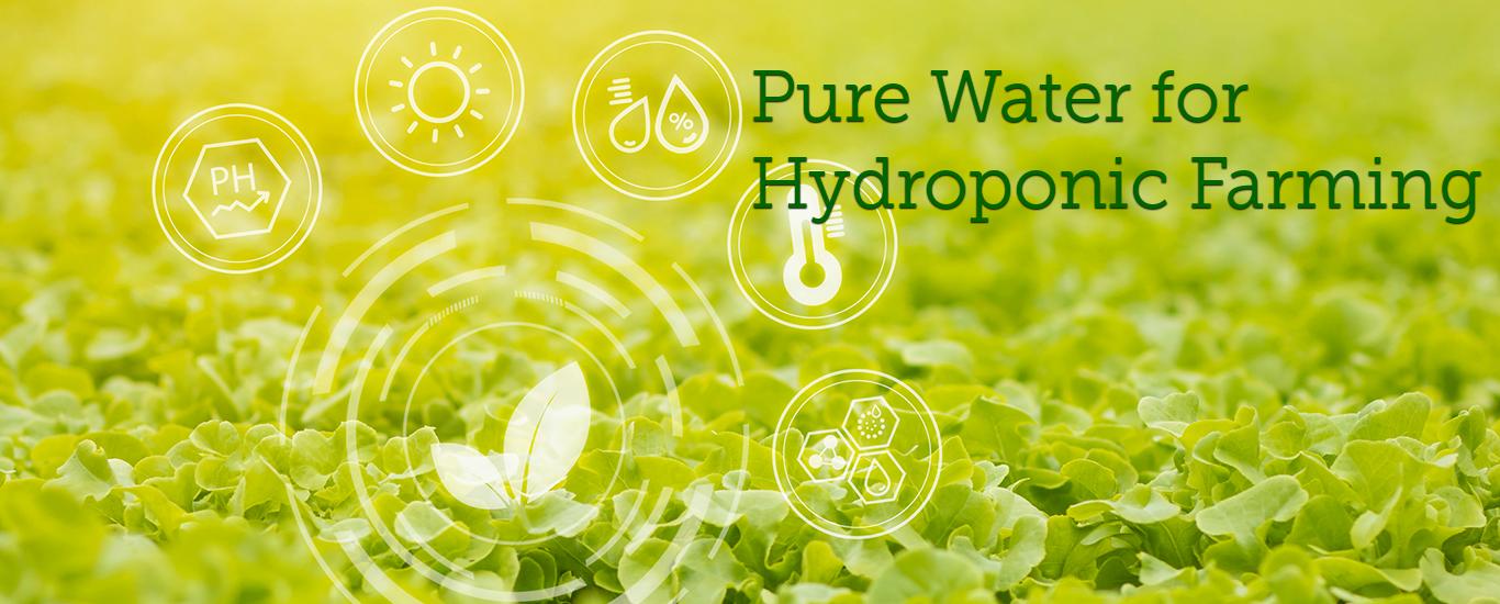 hydroponic banner