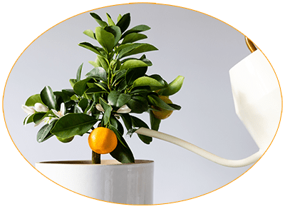 watering plants with distilled water